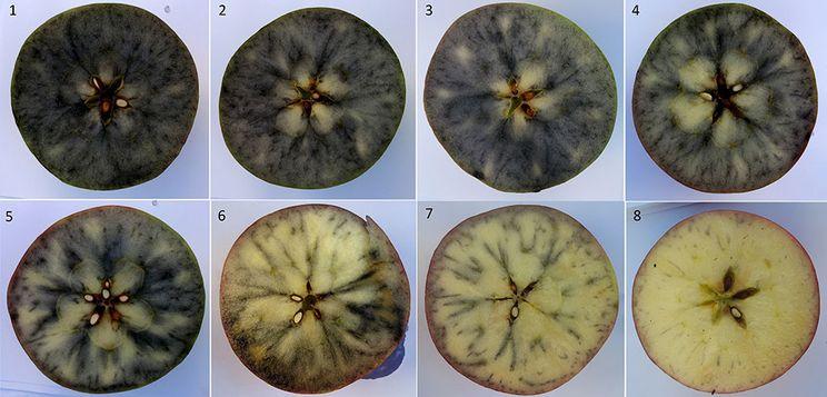 Як визначають ступінь стиглості яблук