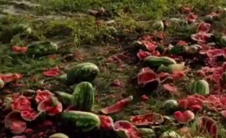 Херсонські фермери трощать непродані кавуни