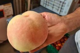 В Італії виростили 758-грамовий персик