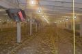 Системи інфрачервоного опалення окуповуються на птахопідприємствах за 1-2 роки