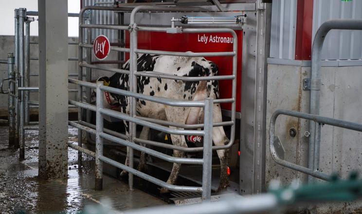 Житомирська «Україна» відкрила другу чергу роботизованої молочної ферми
