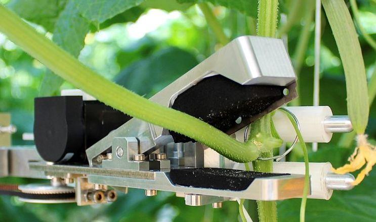 Робот зрізає 10 листків огірка за хвилину
