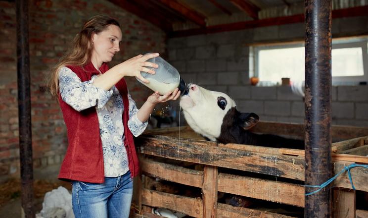 «Сімейні молочні ферми» працюватимуть ще у двох областях