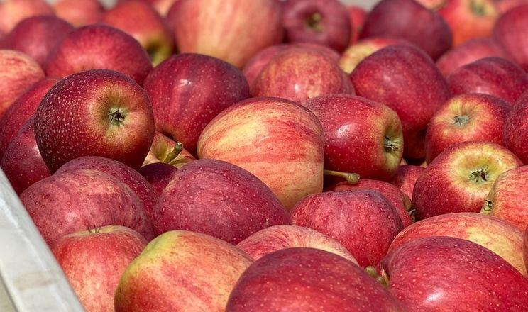 Садівник назвав сорти яблук, на які буде попит