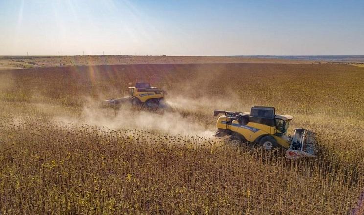 Урожайність соняшнику в ПАЕК набагато вища за минулорічну