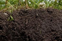 Рівень гумусу в агрофірмі «Колос» за вісім років зріс на 34%