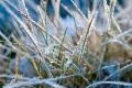Розвиток шкідників у більшості областей стримують нічні заморозки